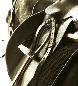 saddle-up-donna-thomas